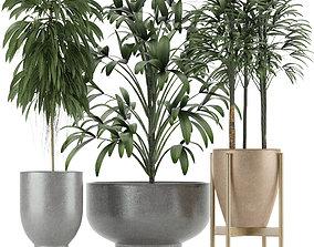 Plants Collection 11 3D