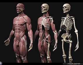 3D model Human Anatomy Kit