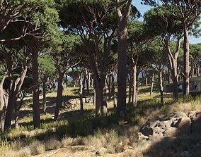 3D model umbrella pine trees