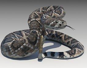 Rattlesnake 3D model animated VR / AR ready