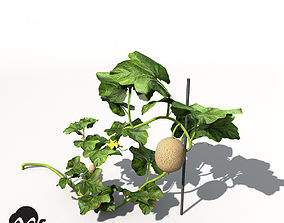 XfrogPlants Cantaloupe 3D model