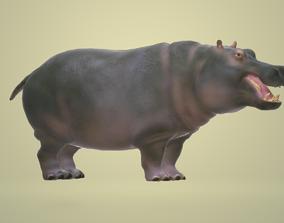 Hippopotamus 3D Animation animated