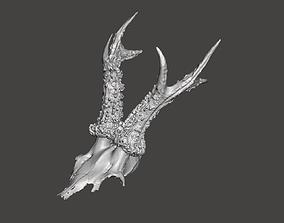 Deer antlers - horns with skull no2 3D print model