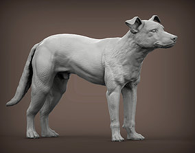 New Zealand Shepherd 3D print model