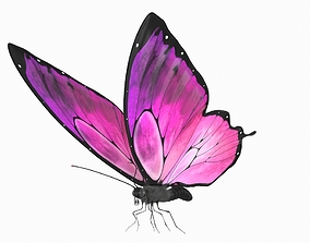 3D asset Butterfly Rigged Low-poly