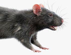 3D model Rat Fur Black