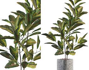 Croton in terrazio flowerpot 3D