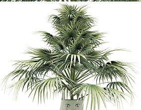 Plants Collection 142 Sabal Minor 3D model