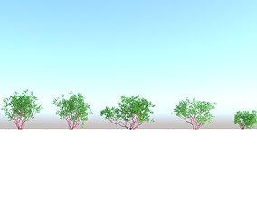 3D Arctostaphylos densiflora