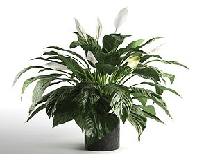 3D Peace Lily in Pot 2