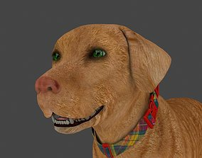 3D FLAB-014 Animated Dog