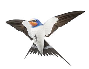 3D asset Barn Swallow Hirundo Rustica