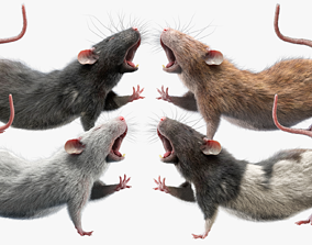 3D Rats Collection Rigged