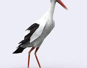 animated 3DRT - Stork