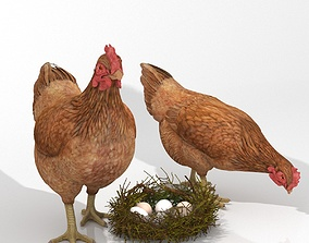3D asset Chicken In Nest With Eggs