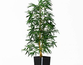 3D model Tall Green Pot Plant