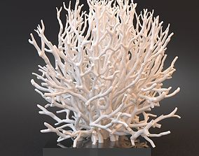 3D model White Coral Specimen on Lucite Stand