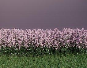 3D Flowering High Poly Oregano