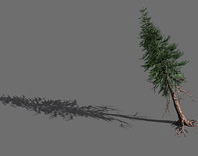 branches-different scales-large fruit-spruce 11 3D model