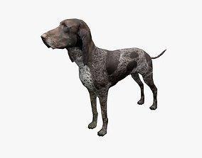 Dog low poly 3D asset