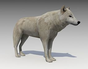 Arctic wolf 3D model animated