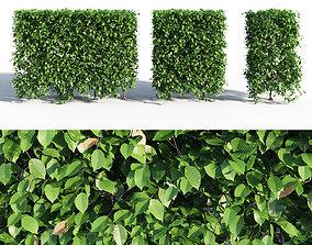 HORNBEAM hedge 3D