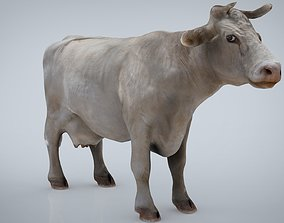 3D asset WHITE COW