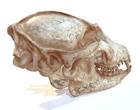 Decorative Skull 3D model