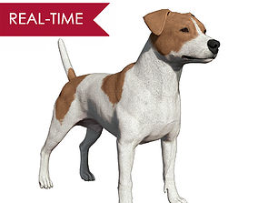 3D asset Jack Russell Real-Time