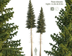 Siberian spruce Picea obovata 11m and 10m 3D PBR