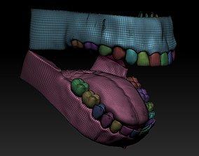 teeth Human mouth 3D