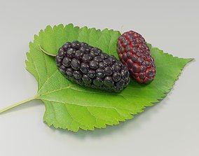 3D model Mulberry