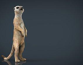 Meerkat 3D model