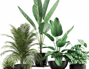 3D model Plants collection 119