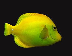 3D asset Cheek Butterfly fish Yellow