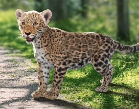 Panthera onca Baby leopard Animated Fur 3D model