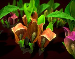 Flower SYMPLOCARPUS RENIFOLIUS 3D model