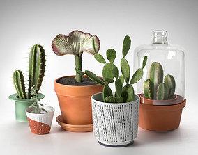Cactus Plants in Pots 3D
