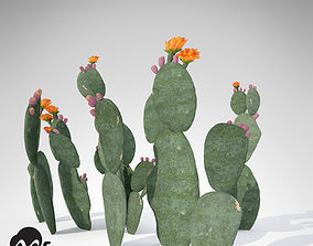XfrogPlants Prickly Pear 3D model