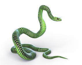 3D asset Rigged Boomslang Snake