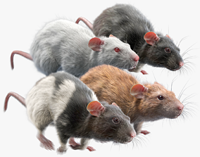 3D model Rat Fur Animated Collection