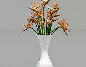 Strelitzia 3D