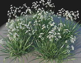 XfrogPlants Luzula Nivea 3D model