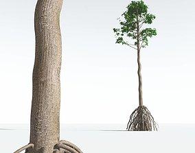 EVERYPlant Common Cordaites 06 --15 Models--
