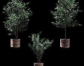 Plants in wooden pots - 3 models