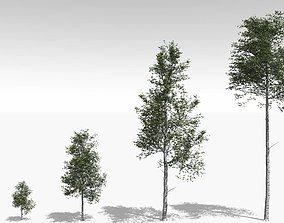 Quaking Aspen Model in Multiple Growth Stages 3D