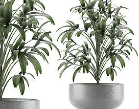 Single Plant 12 3D