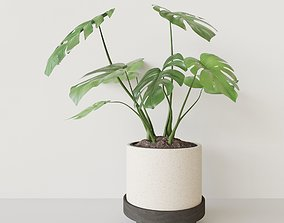 3D PBR Monster Pot Plant