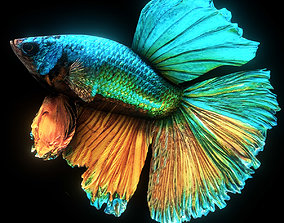 Betta Splendens 3D model animated game-ready