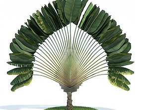 3D Ornamental Tropical Plant